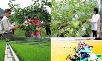 Soluciones para implementar la construcción del nuevo campo vietnamita
