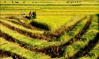 Ayun Ha, punto luminoso en fomento rural