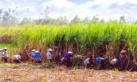 Economía colectiva aporta al desarrollo económico y el bienestar social