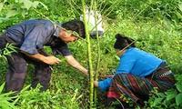 Construcción de nuevas áreas campestres en comuna norteña de Huoi Leng
