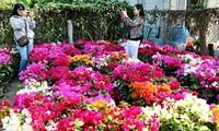 Aldea de floricultura se prepara para Año Nuevo Lunar
