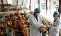 Vietnam se esfuerza en evitar contagio de virus H7N9