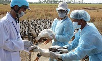 Forman equipos de prevención de gripe aviar A/H7N9 en localidades vietnamitas