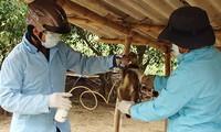 Refuerza Vietnam enfrentamiento a gripe aviar
