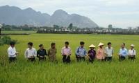 Grupo Anónimo de Materiales e Insumos Agrícolas de Nghe An, pionero en construcción de nuevo campo