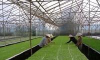 Don Duong, un área especializada de verduras