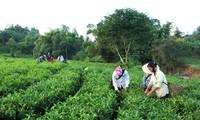 Optimizan recursos internos en el desarrollo rural en Tan Trao