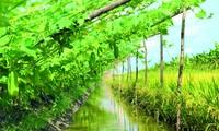 """El modelo """"3 en 1"""" ayuda a agricultores de Yen Khanh a salir de la pobreza"""