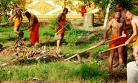 Desarrollo económico de compatriotas jemeres gracias al cambio de cultivos