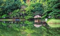 Van Long, área ecoturística con bellezas vírgenes