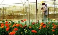 Agricultura tecnológica en comuna Don Duong, provincia Lam Dong