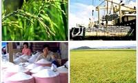 Vietnam intenta lograr 165 mil millones de dólares en exportaciones