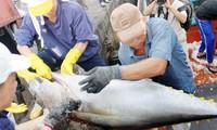 Potencialidades de la pesca de atún en Vietnam