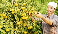 Construcción del nuevo campo a través del cultivo de naranjas