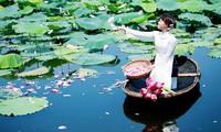 Temporada de flores de loto en Hanoi