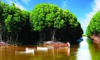 Cultivo de especies acuáticas en el dosel arbóreo revive manglares en Tra Vinh