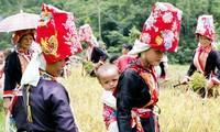 """Fiesta de """"Privación del viento"""" de los nativos de Binh Lieu"""