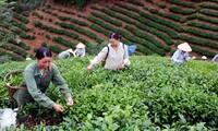 Se consolida desarrollo rural en tierra revolucionaria de Tan Trao