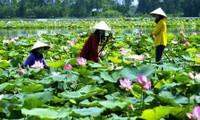 Desarrollo turístico en tierra de loto Dong Thap