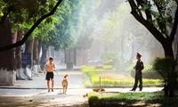 Romántica belleza de las calles hanoyenses en otoño