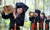 Canelo, nueva alternativa para la reducción de la pobreza de comunidad étnica Dao
