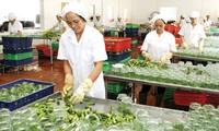 Vietnam busca aumentar exportaciones agrícolas en medio de integración mundial