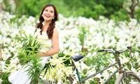 Azucena blanca, la reina de las flores de Hanoi en abril