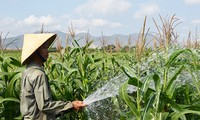 Cambio de estructura del cultivo, camino correcto de comuna Tan Nghia