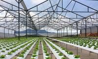 Gran desarrollo de la agricultura de alta tecnología en Ciudad Ho Chi Minh