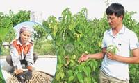 Un éxito en el Vietnam neo-rural gracias a una semilla de origen suramericano