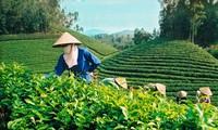 Promueven inversión y comercio de Vietnam en Nueva York