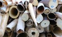 Vietnam comprometido en participar activamente en CITES