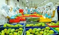Perspectivas de la exportación de verduras y frutas de Vietnam en la etapa de integración