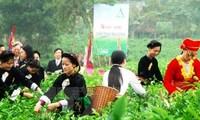 Promocionan producto estratégico del té vietnamita de Thai Nguyen
