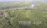 FAO insta a un mejor aprovechamiento de los bosques como fuente energética en América Central