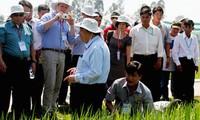 Promueven producción de arroz según estándares internacionales