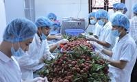 Vietnam por ampliar su mercado de exportación de verduras y frutas