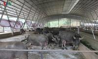 Exitoso modelo de agricultura sostenible en Yen Bai