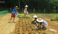 Turismo comunitario: nueva modalidad en provincia de Quang Binh