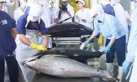 Crecen exportaciones de atún de Vietnam a México
