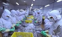 Exportadores de camarón de Vietnam aspiran a superar los tres mil millones de dólares