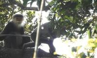 Alianza global encomia los progresos en protección ciudadana y preservación de la biodiversidad en Vietnam