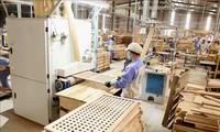 Crece más del 41% la exportación de madera y productos silvícolas de Vietnam en el primer trimestre