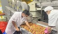 Crece 5,6% el Producto Interno Bruto de Vietnam en los primeros seis meses de 2021