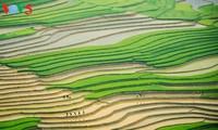 Mù Cang Chải mùa đổ nước, vẻ đẹp của bức tranh đa sắc màu