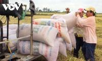 Les exportations de riz estimées à 6,15 millions de tonnes en 2020