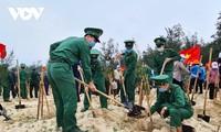 Quang Binh: lancement de la fête de plantation d'arbres du printemps 2021