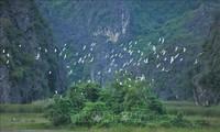 เวียดนามปฏิบัติกิจกรรมปกป้องอนุรักษ์และใช้พื้นที่ชุ่มน้ำอย่างยั่งยืน