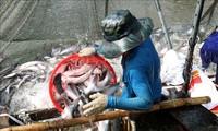 การส่งออกสัตว์น้ำของเวียดนามเพิ่มขึ้นร้อยละ 2.2