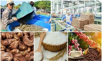 Eight groups of agricultural products surpass billions of USD in revenue